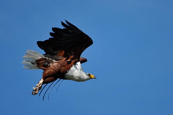 bukela-africa-2015test-experience-birding-1