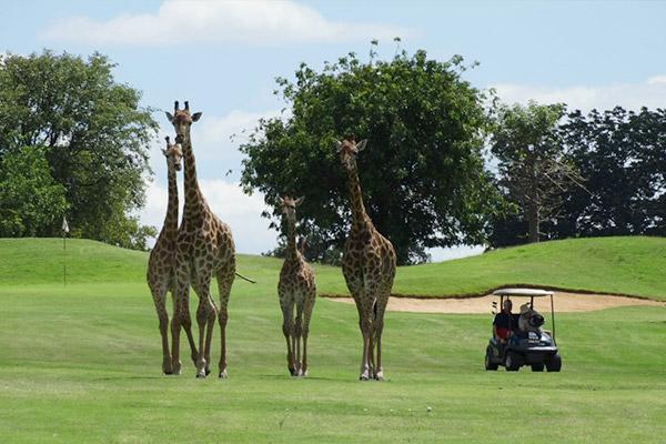 bukela-africa-2015test-experience-golfing-2