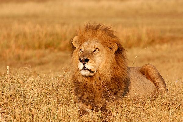 bukela-africa-2015test-experience-guided-2