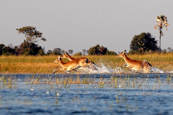 bukela-africa-2015test-experience-guided-4