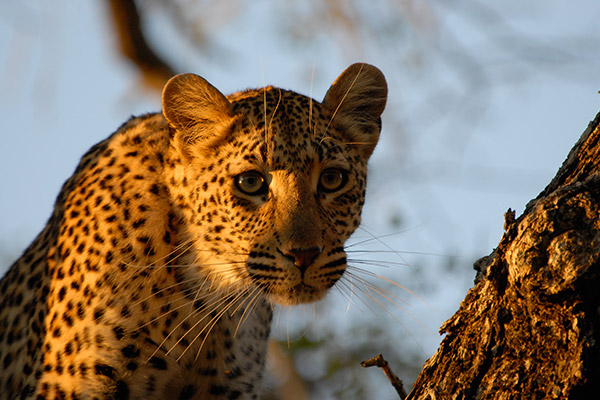 bukela-africa-2015test-experience-guided-5