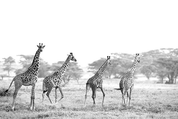 bukela-africa-2015test-experience-photography-1