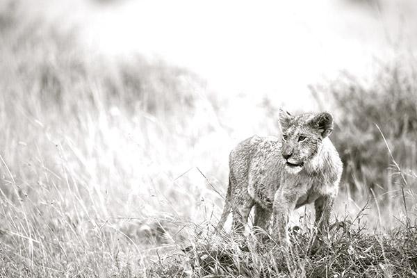 bukela-africa-2015test-experience-photography-2