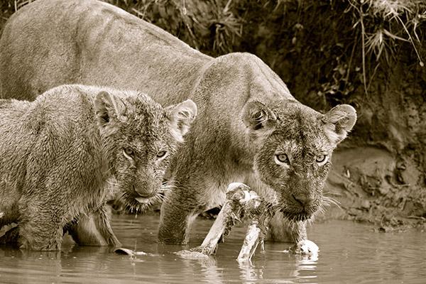 bukela-africa-2015test-experience-photography-6