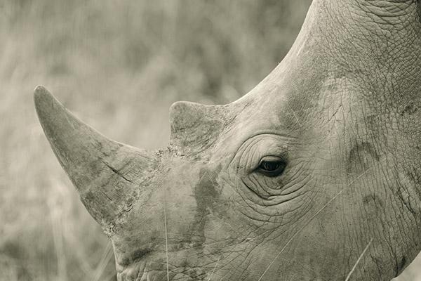 bukela-africa-2015test-experience-photography-7